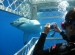 cage diving in the most dangerous waters in the world in Gansbaai, South Africa